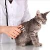 Ветеринарные клиники в Арске